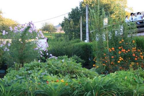 Mugaritz en Errenteria Algunas de las flores que nos comimos