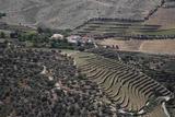 La bodega y el viñedo como recurso turístico