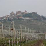 Vinos piamonte cata vinos italianos enoturismo italia col