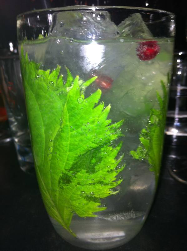 Preparar gin tonic perfecto