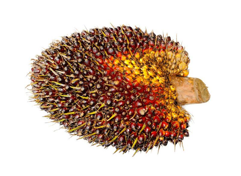 Fruto aceite de pal,a