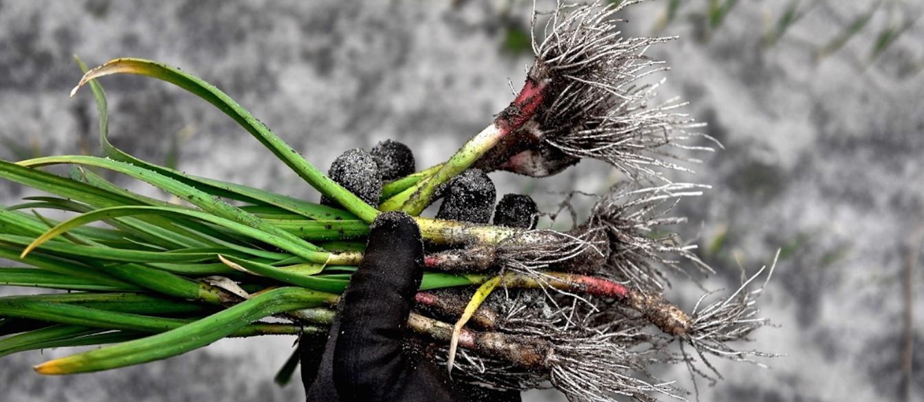 Aurelio_Gómez-Miranda_Kadeau_Copenhague_Agricultura_Bornholm