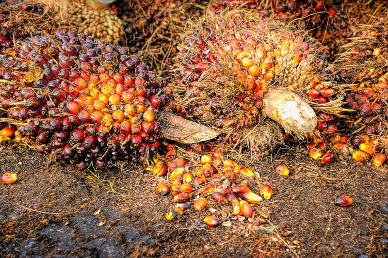 Fruto de la palma