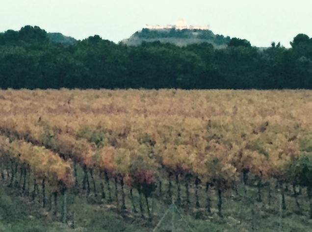 Vista de los viñedos de Legaris y del Castillo de Peñafiel