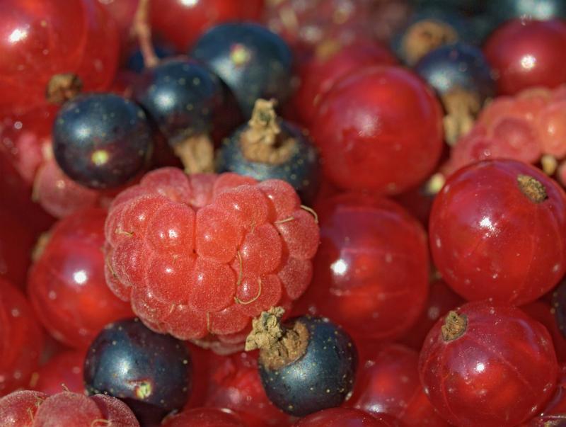 Fruta-roja-tempranilla
