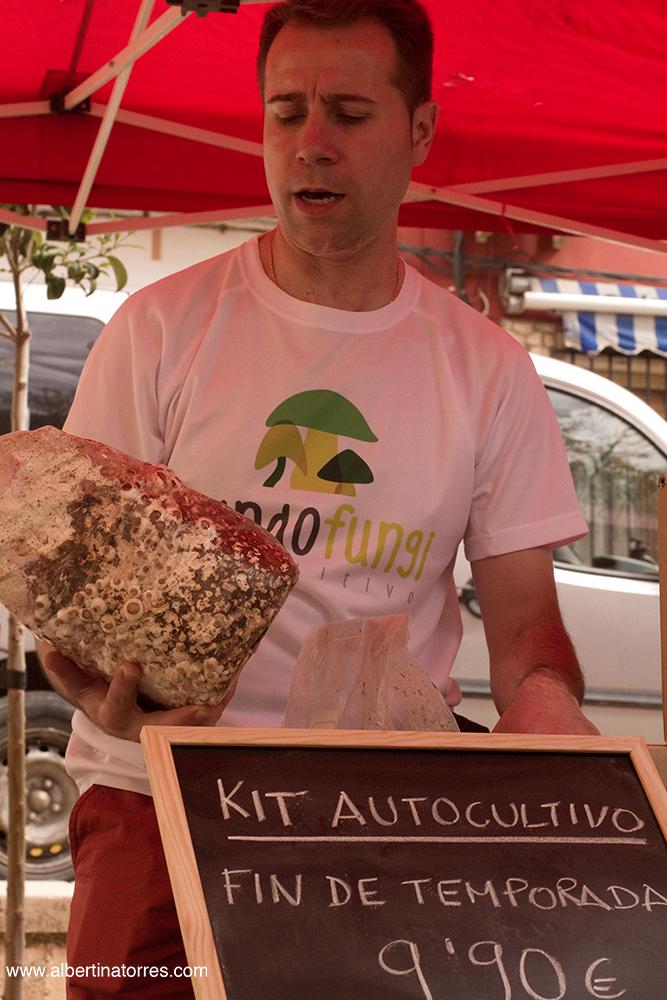 Mundo Fungi Villanueva de la Jara