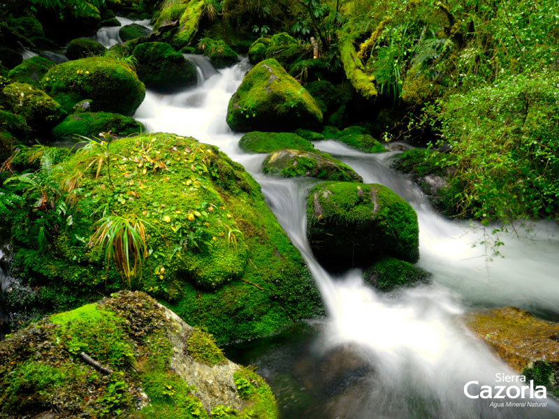 Manantial Sierra Cazorla