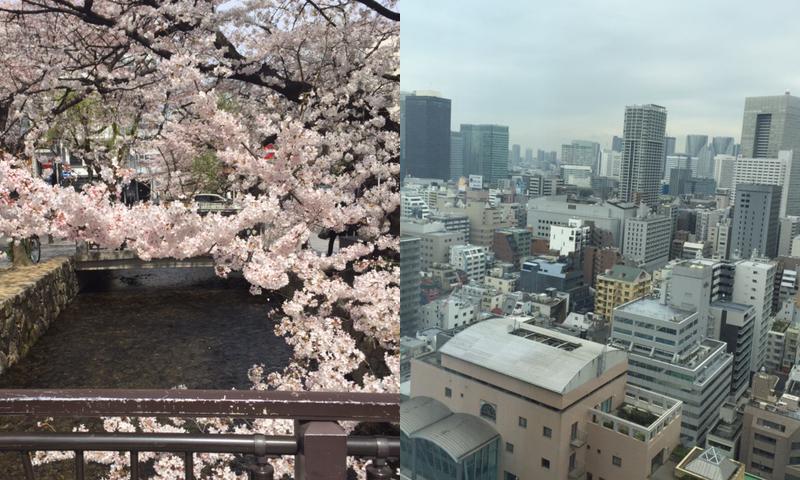 Cerezo en flor en kyoto. Vista de los rascacielos desde una terraza en Tokyo