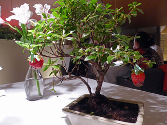 Postres : Bonsai con fresas con chocolate