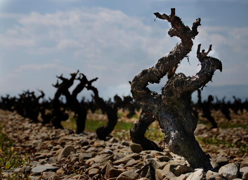 Cepa Bodegas Familiares de Rioja