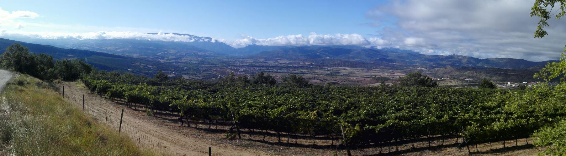 Vistas de parte de las viñas y la bodega