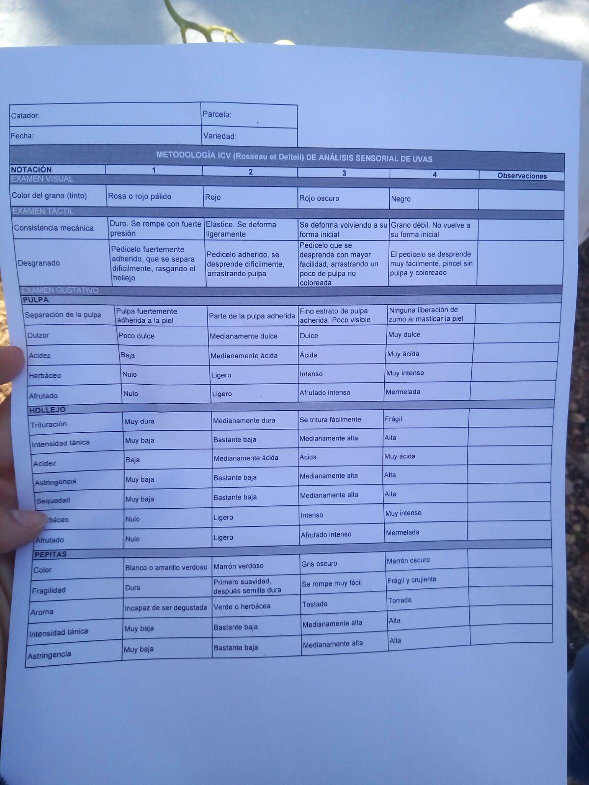 Ficha de protocolo de cata de uva
