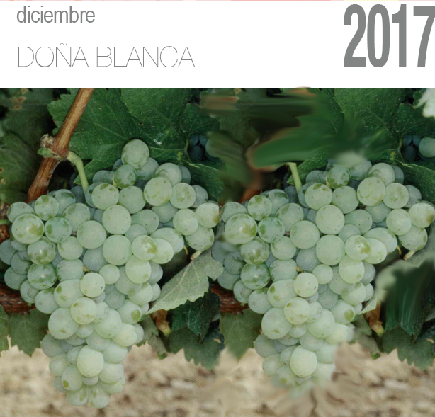 Uva Doña Blanca