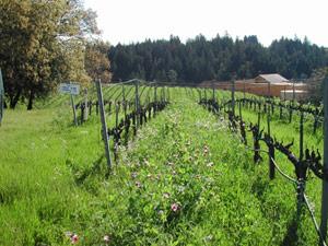 viñedos biodinámicos
