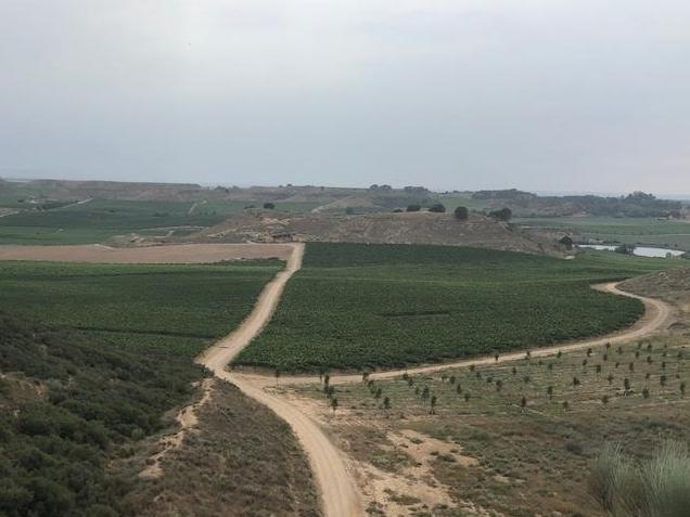 Vista desde el Viñedo de Raimat