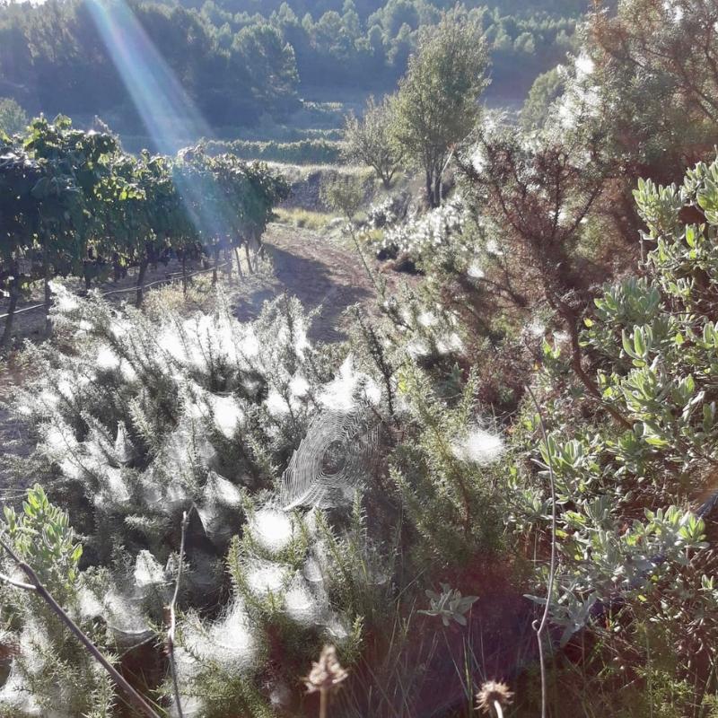 Mas de Sella: Reivindicando la biodiversidad