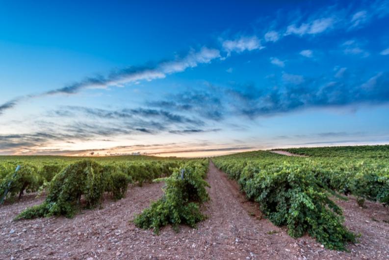 viñas DO Uclés