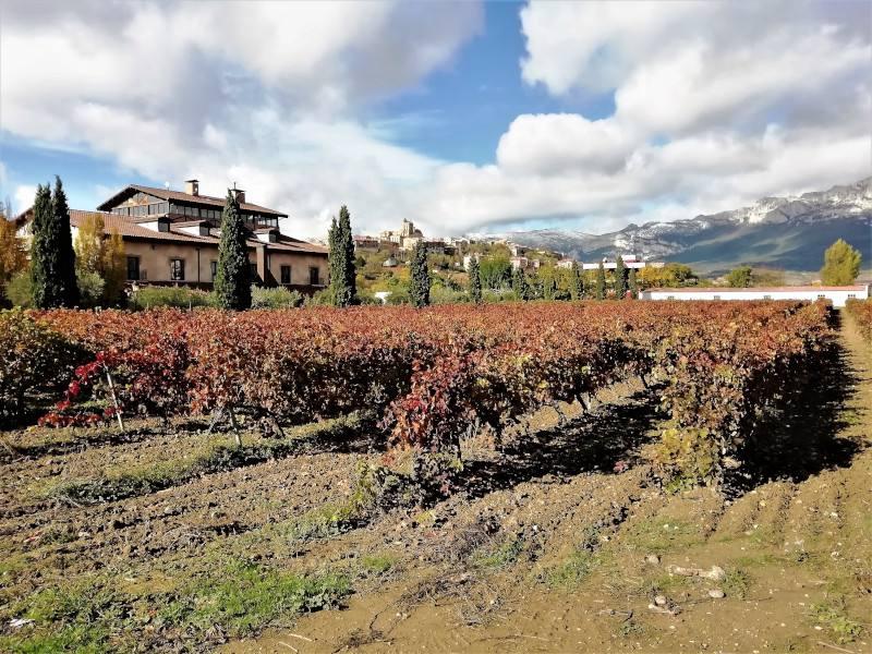 Laguardia en Alava en otoño con viñedos rojos