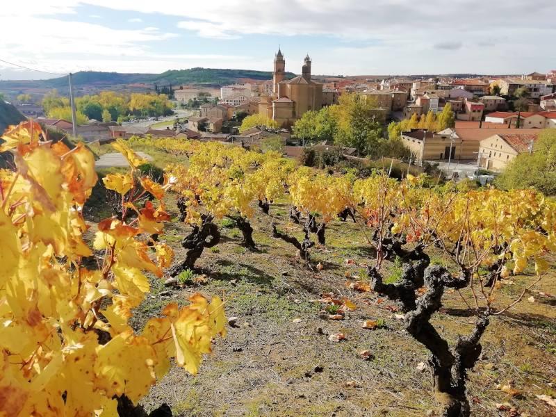 Pueblo de Elciego en Alava con viñas amarillas