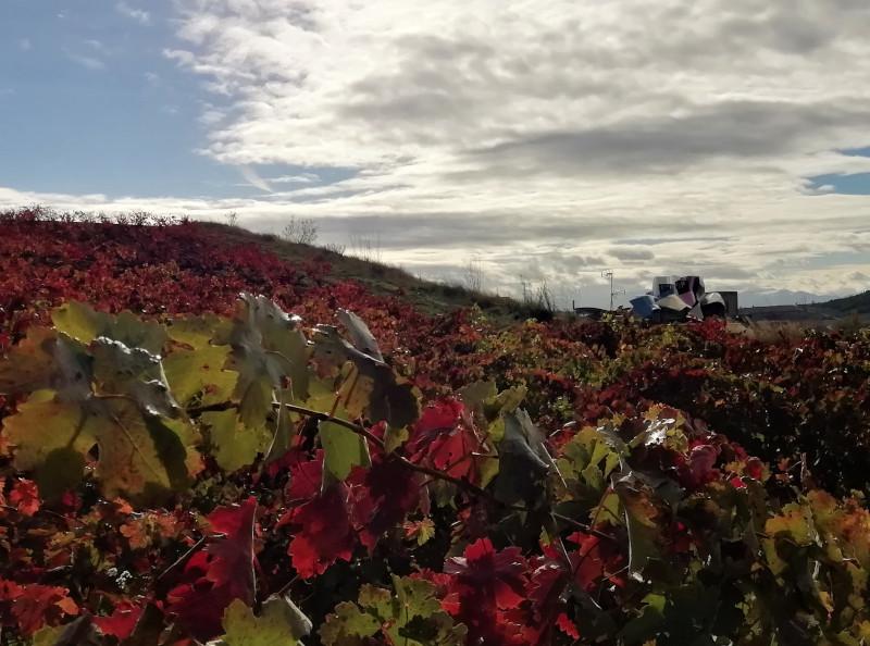 Marques de Riscal con viñedos rojos delante